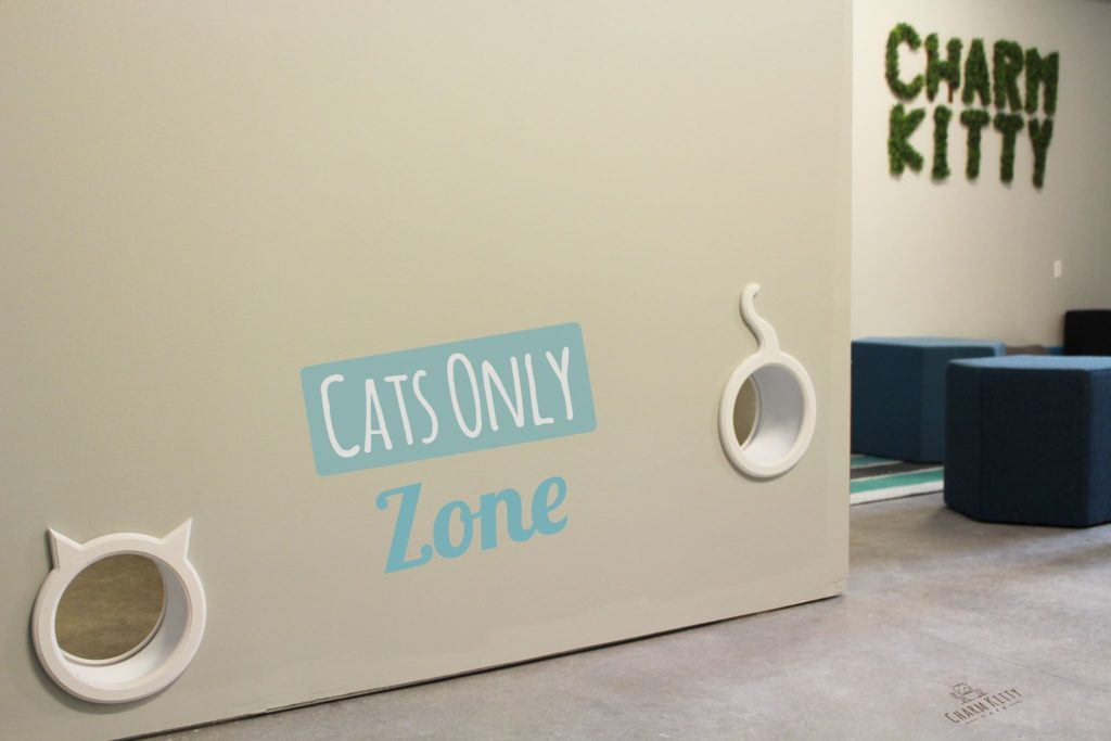 Cats Only Cat Refuge at Charm Kitty Cafe (photo courtesy of Charm Kitty Cafe)