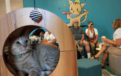 Cats, Coffee, and Cuddles at Charm Kitty Cafe